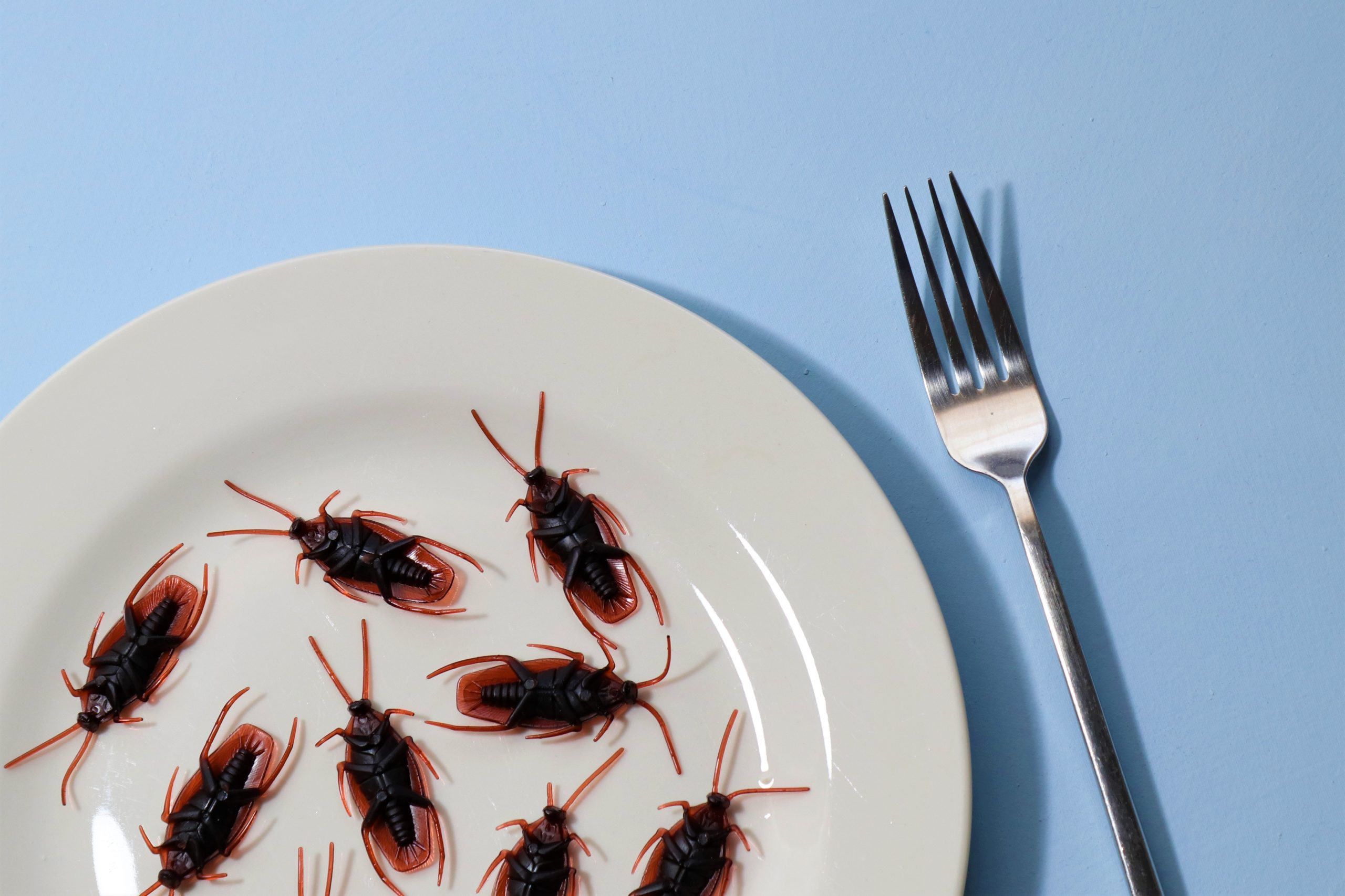 Eight cockroaches on a white plate with a fork beside them