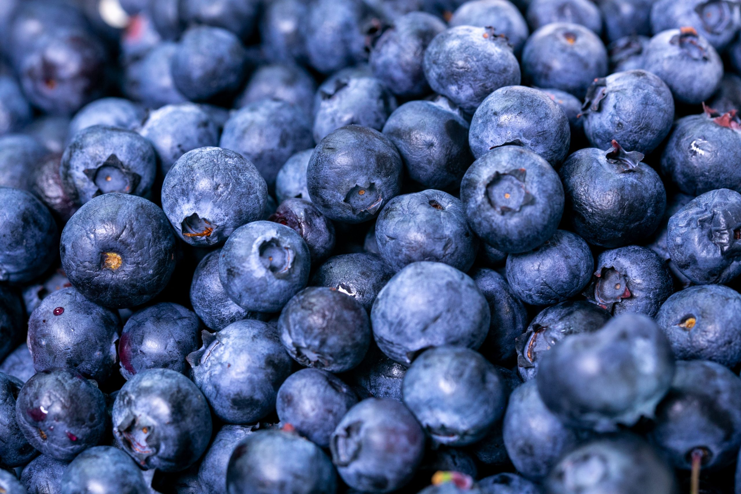 a pile of blueberries